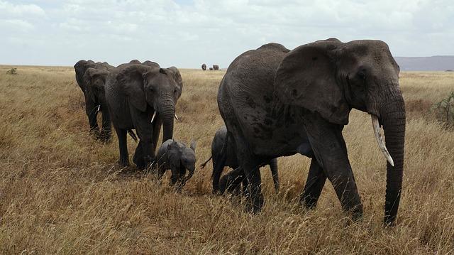 Keluarga Gajah